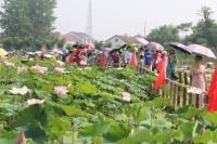 重庆市北碚区以花为媒发展乡村旅游 村民的腰包鼓起来了