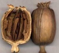 小吃为增香 添加罂粟壳