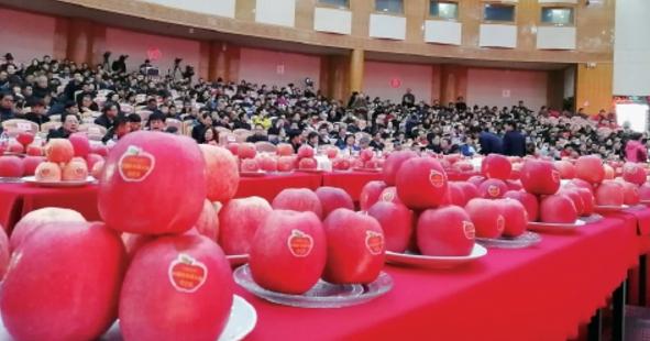陕西果业70年成就