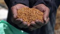 贵州平塘:保障粮食安全丰产 从一粒种子开始